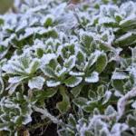 winterize_garden