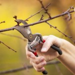 Pruning-Tree