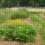 0000027_4_x_330_standard_deer_fence