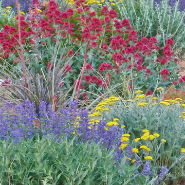 drought-resistant-plants