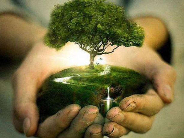 trees-hands