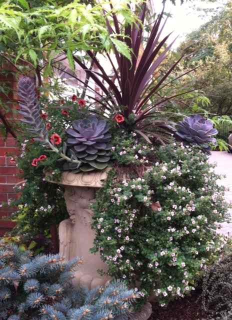 planter-palm-top